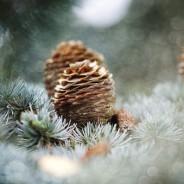 Bon cadeau reflexologie, feng shui Noël